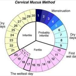 calendario ovulazione da